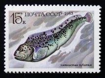 ανήλικος Anarhichas ψαριών, σειρά ψαριών τροφίμων, circa 1983 Στοκ Εικόνες