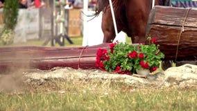 Αναβάτης με το άλογο, που πηδά ένα εμπόδιο απόθεμα βίντεο