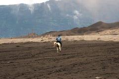 Αναβάτης πλατών αλόγου στη μεσημβρία που οδηγά το καφετί άλογό του στην κοιλάδα στο εθνικό πάρκο Tengger Semeru Στοκ φωτογραφία με δικαίωμα ελεύθερης χρήσης