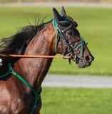 Αναβάτης σε ένα άλογο Στοκ φωτογραφία με δικαίωμα ελεύθερης χρήσης