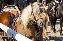 Αναβάτης σε ένα άλογο Στοκ Φωτογραφία