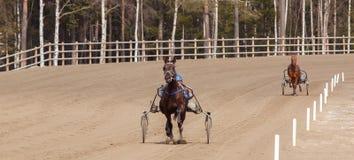Αναβάτης σε ένα άλογο Στοκ φωτογραφίες με δικαίωμα ελεύθερης χρήσης