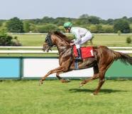 Αναβάτης στο άλογο κόλπων Ιππόδρομος Magdeburg Γερμανία Στοκ Εικόνες