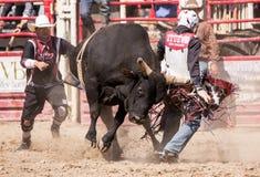 Αναβάτης του Bull στον κίνδυνο Στοκ εικόνα με δικαίωμα ελεύθερης χρήσης