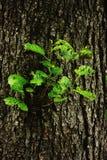 Αναγεννημένο δέντρο στο δέντρο στοκ εικόνα