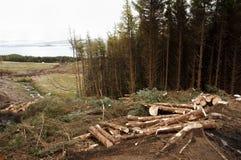 Αναγραφή δέντρων στοκ φωτογραφίες