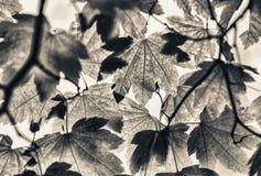 Αναδρομικά φωτισμένα πράσινα φύλλα δέντρων Έννοια εποχής και φύσης Στοκ εικόνα με δικαίωμα ελεύθερης χρήσης