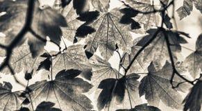 Αναδρομικά φωτισμένα πράσινα φύλλα δέντρων Έννοια εποχής και φύσης Στοκ Φωτογραφίες