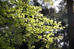 αναδρομικά φωτισμένα πράσινα φύλλα Στοκ Φωτογραφίες