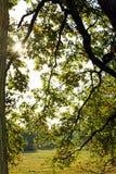 Αναδρομικά φωτισμένα φύλλα φθινοπώρου Στοκ φωτογραφίες με δικαίωμα ελεύθερης χρήσης