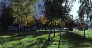 Αναδρομικά φωτισμένος ήλιος και διάβαση πεζών με τα φανάρια απόθεμα βίντεο