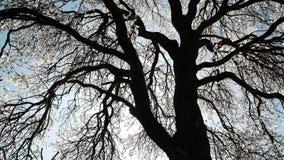 Αναδρομικά φωτισμένος του ανθίζοντας δέντρου την άνοιξη απόθεμα βίντεο