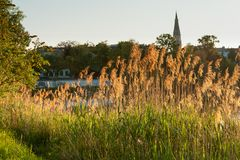 Αναδρομικά φωτισμένος χρυσός κάλαμος κοντά στον ποταμό Δούναβης στη Βιέννη Στοκ φωτογραφία με δικαίωμα ελεύθερης χρήσης