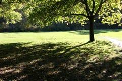 αναδρομικά φωτισμένο δέντρ& στοκ φωτογραφίες με δικαίωμα ελεύθερης χρήσης