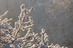αναδρομικά φωτισμένο χιόνι  Στοκ Φωτογραφία