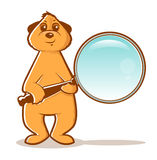 Αναζήτηση Meerkat Στοκ εικόνα με δικαίωμα ελεύθερης χρήσης
