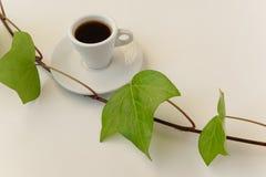 Αναζωογονώντας χρόνος καφέ Άσπρο φλυτζάνι καφέ με τα φρέσκα πράσινα φύλλα στο άσπρο υπόβαθρο Στοκ φωτογραφία με δικαίωμα ελεύθερης χρήσης