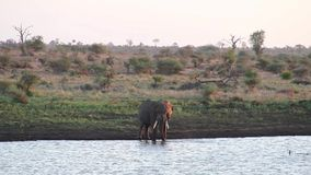 Αναζωογόνηση ελεφάντων από ένα waterhole στην αφρικανική σαβάνα απόθεμα βίντεο
