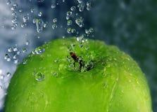 αναζωογόνηση μήλων Στοκ Φωτογραφίες
