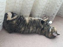 Αναιδές κατώτερο τιγρέ κορίτσι γατών Στοκ Φωτογραφίες