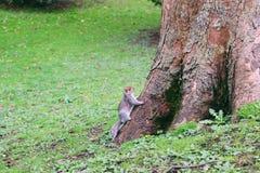 Αναιδής σκίουρος στοκ φωτογραφία με δικαίωμα ελεύθερης χρήσης