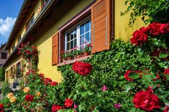 Ανακαινισμένα παράθυρα στο παλαιό του χωριού σπίτι Ανθίζοντας τριαντάφυλλα, καλοκαίρι δ Στοκ Εικόνα
