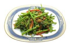 Ανακατώστε το τηγανισμένο σπανάκι νερού, δόξα πρωινού με τις ξηρές γαρίδες, θαλασσινά, ταϊλανδικά τρόφιμα Στοκ Εικόνα