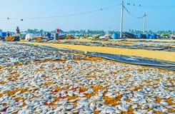 Ανακαλύψτε το λιμένα Negombo Στοκ Εικόνα