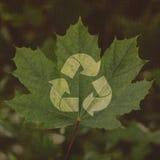Ανακυκλώστε το σύμβολο σε ένα υπόβαθρο του πράσινου φύλλου Στοκ Φωτογραφίες