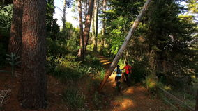 Ανακύκλωση ζευγών οδοιπόρων στο δάσος απόθεμα βίντεο