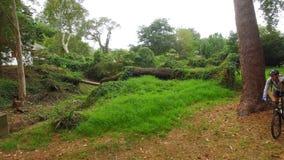 Ανακύκλωση οδοιπόρων στο δάσος φιλμ μικρού μήκους