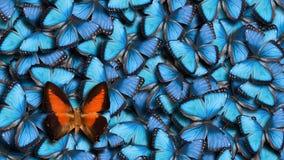 Αναλογία 16 έως 9 υποβάθρου πεταλούδων στοκ εικόνες με δικαίωμα ελεύθερης χρήσης