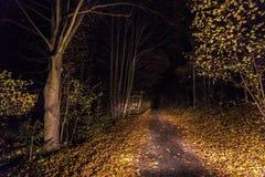 Αναμμένη πορεία με τα πεσμένα φύλλα τη νύχτα Στοκ εικόνα με δικαίωμα ελεύθερης χρήσης