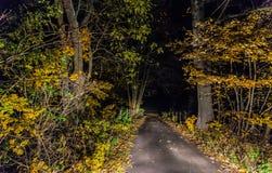 Αναμμένη πορεία με τα πεσμένα φύλλα τη νύχτα Στοκ εικόνες με δικαίωμα ελεύθερης χρήσης
