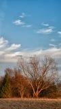 αναμμένο δέντρο ήλιων στοκ εικόνες
