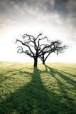 αναμμένο δέντρο μήλων πίσω στοκ εικόνες