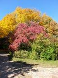 Αναμνηστικοί κήποι του Λίνκολν Στοκ εικόνες με δικαίωμα ελεύθερης χρήσης