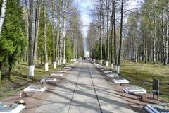 αναμνηστικός πόλεμος sinyavino υψών Στοκ Εικόνες