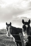 Αναμονή αλόγων Στοκ Φωτογραφίες
