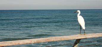 αναμονή ερωδιών ψαριών Στοκ φωτογραφίες με δικαίωμα ελεύθερης χρήσης
