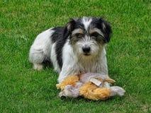 Αναμονή σκυλιών που παίζει Στοκ Φωτογραφία