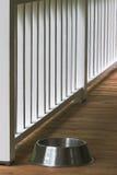 αναμονή σκυλιών Στοκ Φωτογραφία