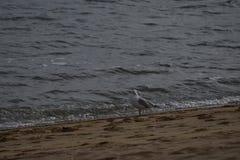 Αναμονή Birdie που παίρνει απεικονισμένη Στοκ φωτογραφίες με δικαίωμα ελεύθερης χρήσης