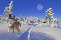 αναμονή santa Στοκ Φωτογραφίες