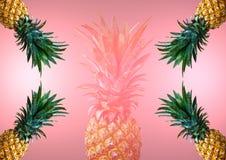Ανανάδες στο ρόδινο υπόβαθρο στη θερινή έννοια στοκ εικόνες