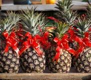 Ανανάδες που διακοσμούνται με τις κόκκινες κορδέλλες Στοκ Εικόνα