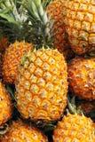 Ανανάδες Στοκ Φωτογραφίες