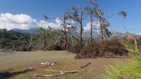 Αναπάντεχο κέρδος στη δασική ζημία θύελλας Πάρκο Τουρκία Phaselis απόθεμα βίντεο