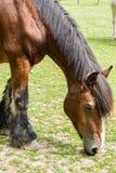 Αναπαραγωγή και έννοια ζώων: στοκ εικόνες με δικαίωμα ελεύθερης χρήσης