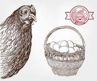 Αναπαραγωγή πουλερικών Στοκ Φωτογραφίες